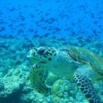 Горящие-туры-на-Мальдивы