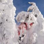 adam_snowghost