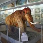 zoo-muzei1