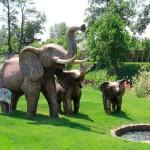 slon-naumana