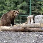 bear_1430142276_600x400_3_0